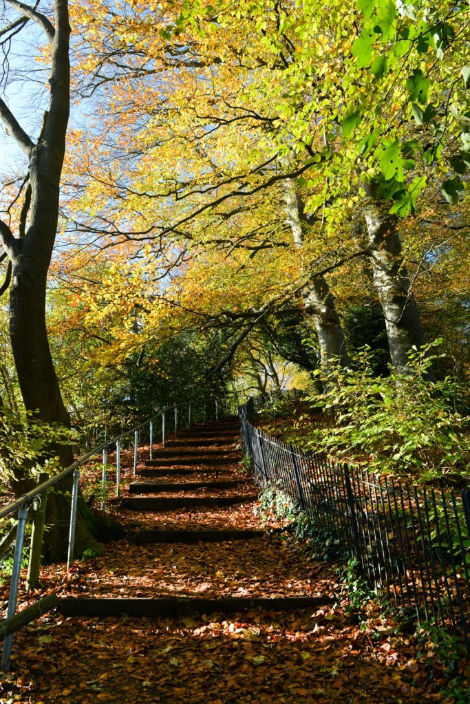 steps to Lyncombe Hill Fields