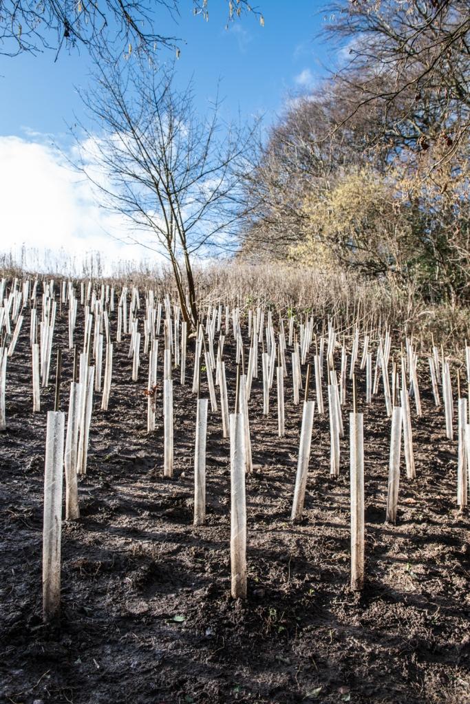 580 Saplings Planted